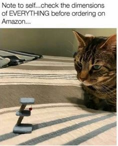 """LOL that poor cat looks so betrayed and disappointed like, """"Wtf is this shit!? Is this some kind of joke!?"""""""