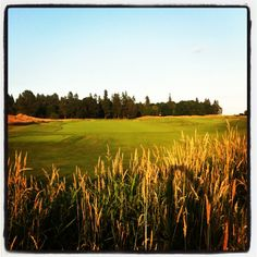 Grew up looking at this across from my Grandparents farm, wasn't a famous golf course back then. Hillsboro Oregon, Famous Golf Courses, Portland Oregon, Grandparents, Growing Up, Pumpkin, Childhood Memories, Travel, Life