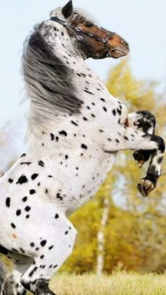#horse# #animals#