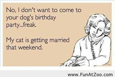 Dogs birthday party Funny picture
