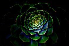 Príroda, Desktop, Flora, Farba