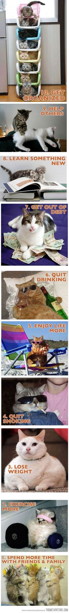 New year resolutions with cats For more New Years cats, visit https://www.facebook.com/funholidaycats