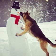 I love German Shepherds and Snowmen!  Perfect Combination!