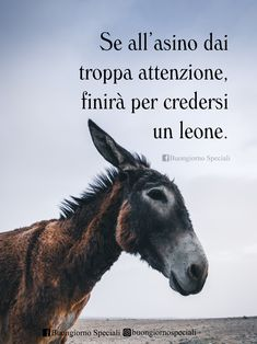 Keep that in Tienilo a mente If you give too much attention to the donkey, he will end up believing himself to be a lion. : Keep that in Tienilo a mente If you give too much attention to the donkey, he will end up believing himself to be a lion. Bible Quotes, Words Quotes, Funny Proverbs, Quotes For Him, Me Quotes, Funny Quotes Tumblr, Baby Bike, Funny Phrases, The Donkey