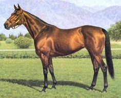Horse_Paseana-big.jpg (592×480) Richard Stone Reeves