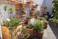 Projekt Plants, Tutorials, Projects, Plant, Planets