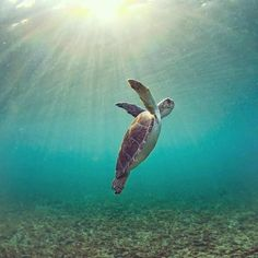 Turtle swimming to the surface