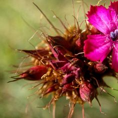Mountain flower / 500px