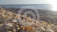 Photo about Lots of sea shells on the bank of the sea with warm light after sunrise. Image of warm, coast, relaxation - 49077315 Sea Shells, Sunrise, Coast, Warm, Stock Photos, Photography, Image, Photograph, Seashells