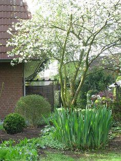 amelanchier als obstbaum eine felsenbirne als naschobst. Black Bedroom Furniture Sets. Home Design Ideas