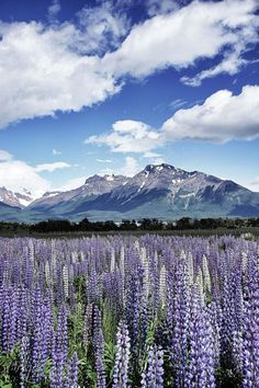 The Patagonian Mountains