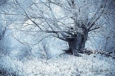 Just like a tree from a fairy tale in a winter scene. For more photos visit my website: Joop Snijder Photography Winter Love, Winter Snow, Winter Picture, Winter Colors, Christmas Wonderland, Winter Wonderland, Winter Magic, Winter Trees, Winter Scenery