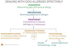 Dealing With Dog Allergies Effectively