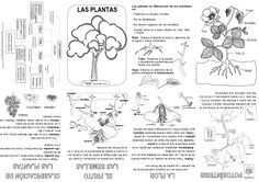 Source by Plant Lessons, Science Lessons, Teaching Science, Science For Kids, Science Activities, Science And Nature, Activities For Kids, Plant Projects, Plant Science