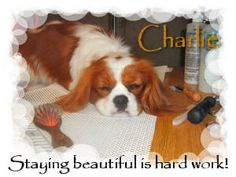 This is my Charlie, taken a couple years ago. Still love it. He's so relaxed!