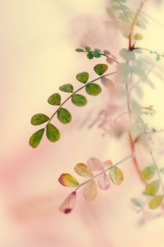 Beautiful image of pastel pink and green foliage! Bokeh Photography, Peach And Green, Hue Color, Jolie Photo, Soft Colors, Pretty Pictures, Color Inspiration, Bunt, Beautiful Flowers