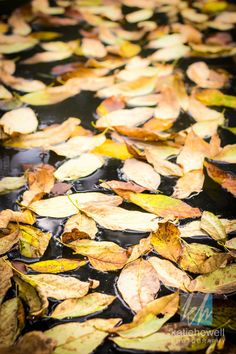 Fine Art Photography- Autumn Leaves on Pond