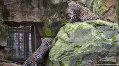 """""""O Grito do Bicho"""": Zoológico alemão mata leão após fuga"""