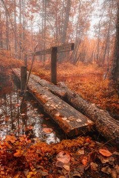 Autumn Bridge byTuomo Arovainio