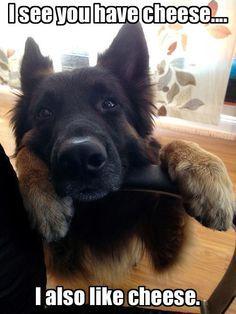 German Shepherd beggar