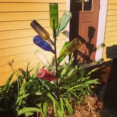 My bottle tree