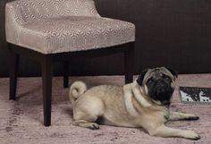pure classics - home INTERIOR    #home #interior #homeinterior #interiordesign #inneneinrichtung #wohnen #living #schlafzimmer #textilien #valentini #meridiani #eichholtz #westwing #bloomingville #cool #classic #zeitlos #edel #raumausstattung #hotel #luxus #innenraumgestaltung #sofa #fauteuil #mops