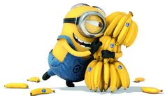 Stuart's love for bananas is unstoppable.   Minions Movie   In Theaters July 10th