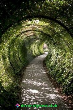 Garden tunnel, Alnwick Castle, Northumberland, England - A tunnel in the back yard! This would be fun! Be sure to check out the Poison Garden Alnwick Castle, Poison Garden, The Secret Garden, Secret Gardens, Parcs, Backyard Landscaping, Landscaping Ideas, Walkway Ideas, Patio Ideas