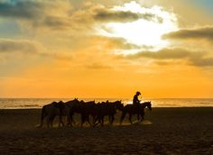 Taking Them Home by Robin Graves on 500px, Horses on Rosarito Beach, Baja California, Mexico
