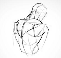 Proko- Shoulder Muscles!
