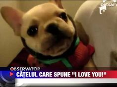 Un caine care spune I Love You 5 AUGUST 2012 - YouTube