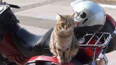 """Le chat """"motard"""""""
