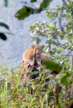 wildlife, photograpthy in chitwan