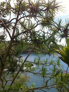Onome Bay