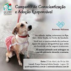 BONDE DA BARDOT: RJ: Associação Quatro Patinhas faz campanha de adoção na Fonte da Saudade, na Lagoa, neste sábado (23/04)