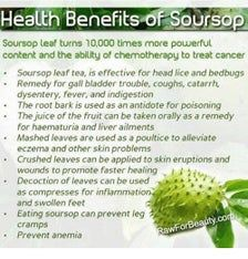 Soursop Benefits, Coconut Benefits, Tea Benefits, Health Benefits, Health Tips, Health Facts, Bed Bug Remedies, Lice Remedies, Health Remedies