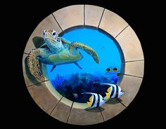 TurtleFishTrompe l'oeilMural