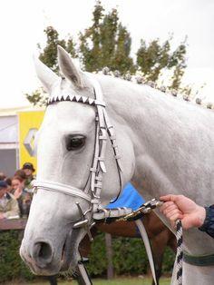Horses, Animals, Sport, Animales, Deporte, Animaux, Sports, Animal, Animais