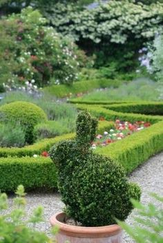 How delightful this Bunny topiary is.how marvelous to blend the whimsical with the formal in this garden of Box Woods & lovely colored flowers,