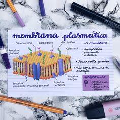 Medicine Notes, Medicine Student, Mental Map, Study Organization, Medical Anatomy, School Notebooks, Bullet Journal School, Study Planner, Lettering Tutorial