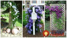 Popínavá réva plamienka (clematisu) je nádhernou ozdobou plotov, terás alebo fasády. Kvety v sýtych farbách pôsobia až rozprávkovým dojmom. Úžasné nápady, ako pestovať obľúbený plamienok, ktoré ešte zvýraznia jeho krásu. Vďaka týmto nápadom bude vyzerať ešte krajšie. Ladder Decor, Outdoor Structures, Gardening, Home Decor, Homemade Home Decor, Garten, Lawn And Garden, Decoration Home, Horticulture