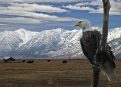 Eagles and Agriculture - Sierra Nevada Geotourism MapGuide. Enjoy the beauty of Carson Valley at a stunning time of year.