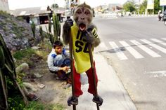 Oct. 28, 2013. A street monkey performs on a sidewalk in Solo, Central Java, Indonesia.