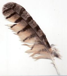 Love the furriness...the first feather I remember finding....owl.