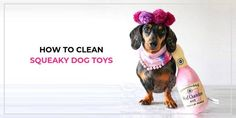 Squeaky toys are a fun and dogs absolutely go nuts over them. You'll want to clean them regularly to make sure your dog is healthy. Here's how to clean plush toys without wrecking the squeaker. Cleaning Toys, Puppy Play, Stay Happy, Pet Safe, Jack Russell Terrier, Dog Toys, Your Dog, Pets, Animals And Pets