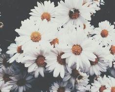 libra rising | Tumblr