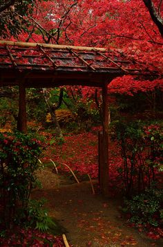 Autumn leaves, Kyoto, Japan
