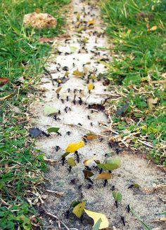 Ants =)