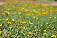 Aula 5 - Jardim Botânico - (Nikon D5000)