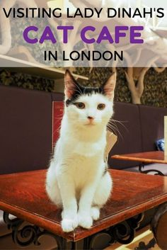 High Tea at Lady Dinah's Cat Cafe in London